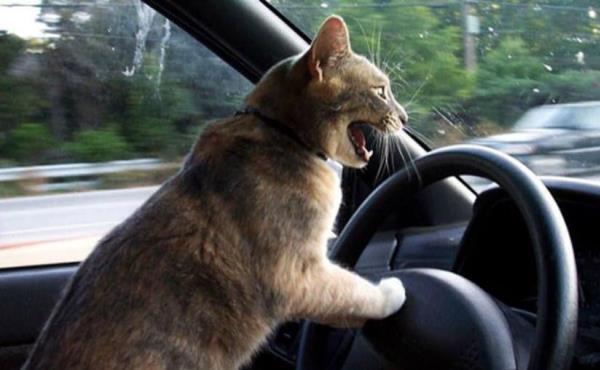"""Tips สำหรับทาสแมว ... กับวิธีรักษา """"รอยขีดข่วนบนรถ"""""""