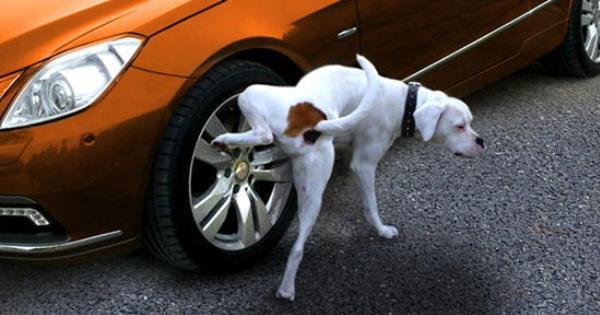 """""""ฉี่สุนัข"""" สามารถทำให้ล้อแม็กเสียหายได้ จริงหรือ ?!"""