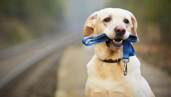 """ทำอย่างไรดี !? กับการแก้ปัญหาอุบัติเหตุจากการขับรถชน """"สุนัข"""""""