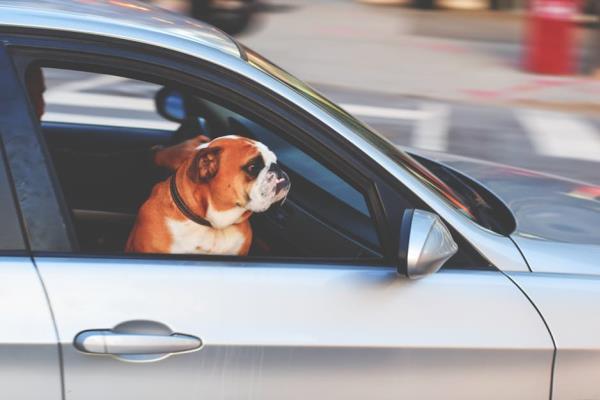 """การแก้ปัญหาอุบัติเหตุจากการขับรถชน """"สุนัข"""""""