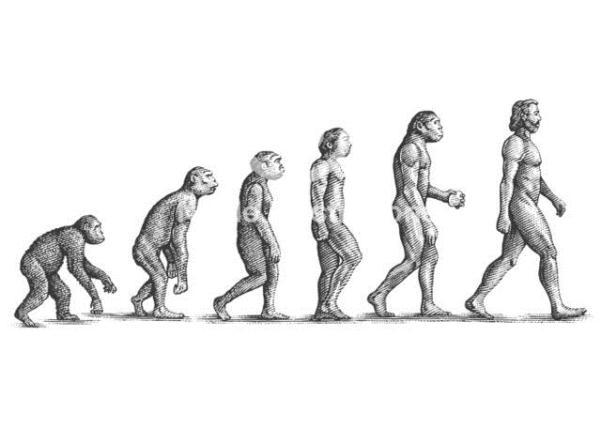 มนุษย์สิ่งมีชีวิตที่ได้ชื่อว่าฉลาดที่สุดและวิวัฒนาการมาจากลิง