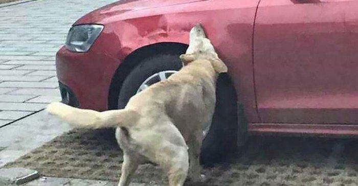 หมาจรกัดรถ ประกันจ่ายไหม