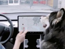 Tesla พัฒนาฟีเจอร์ใหม่เพื่อคนรักสัตว์: DOG MODE