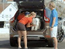 """Volvo สะท้อนผลศึกษา """"ขับรถพร้อมกับหมา"""" อาจไม่ปลอดภัย ต้องมีอุปกรณ์ควบคุม"""
