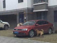 หมากัดรถ ! ประกันจ่ายไหม ถามหาความรับผิดชอบจากใคร ? ถ้าคู่กรณีไม่ใช่คน
