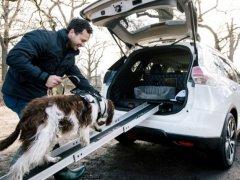 5 รถยนต์สำหรับคนรักสุนัข